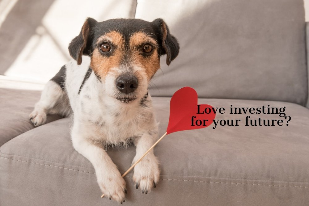 romantic-jack-russell-terrier-dog-lovable-dog-is-holding-a-heart-to-picture-id1086871918.jpg