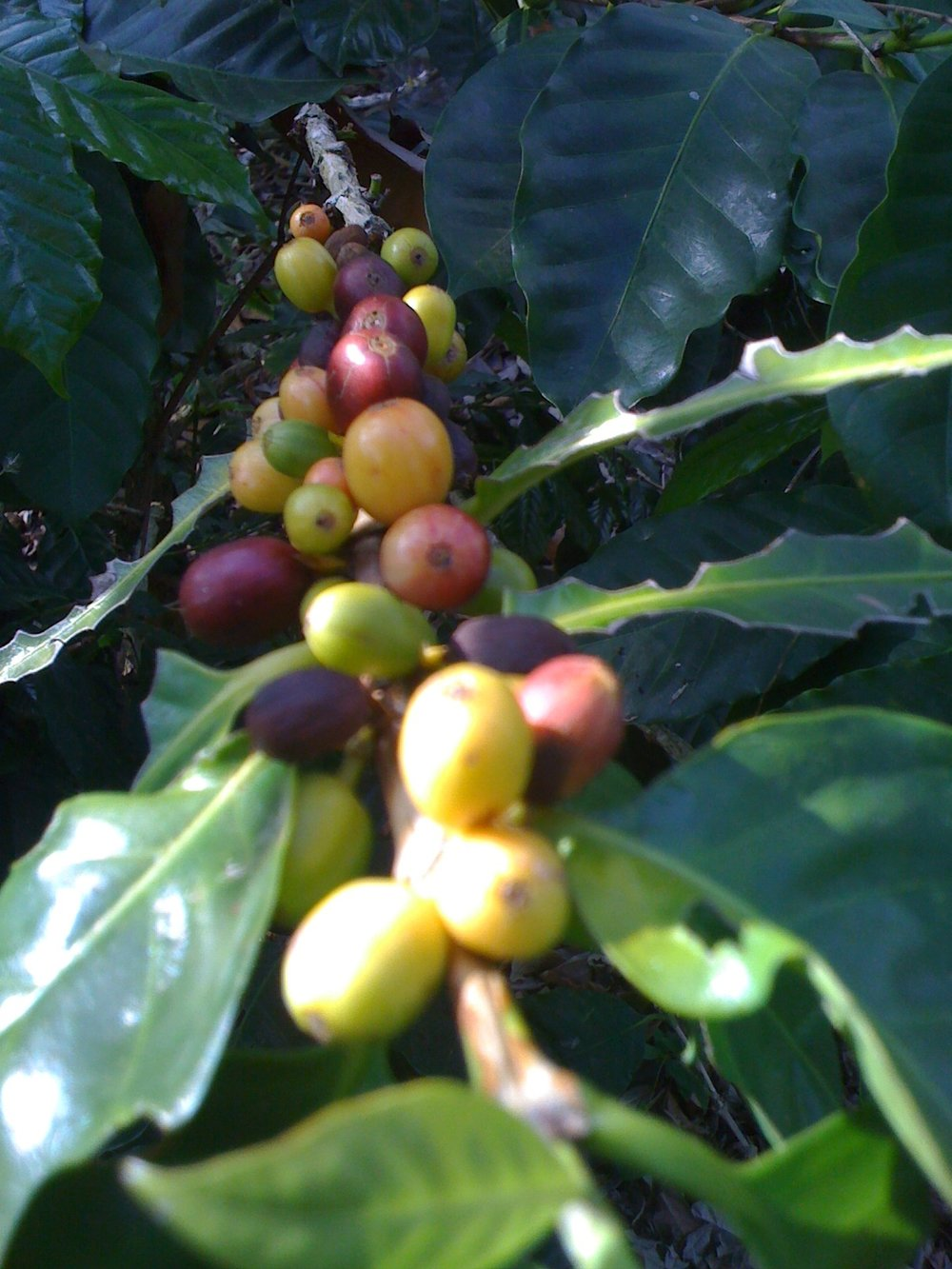 Fair, Organic, 100% Give Back   Our Reason For Bean…    Learn More