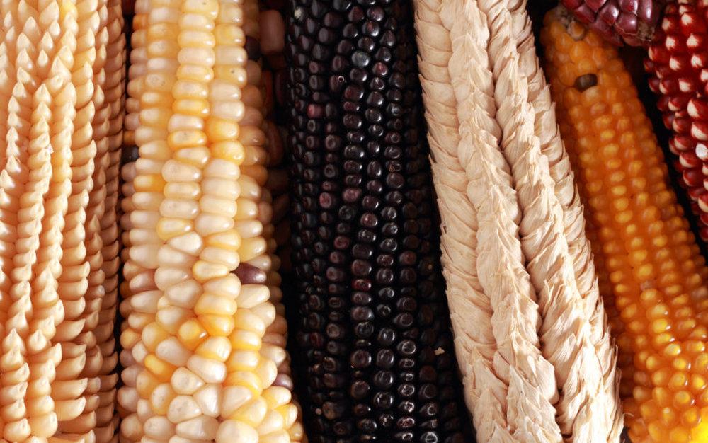 Festival del maíz, el frijol y el amaranto.