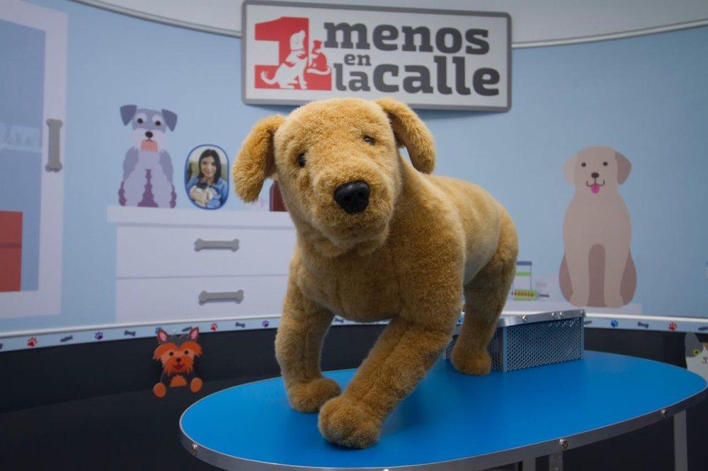 Royal Canin_Exhibicion Uno Menos en la Calle 2.jpeg