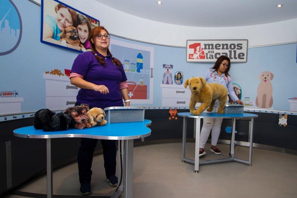 Royal Canin_Exhibicion Uno Menos en la Calle.jpeg