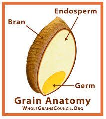 whole grain.jpeg