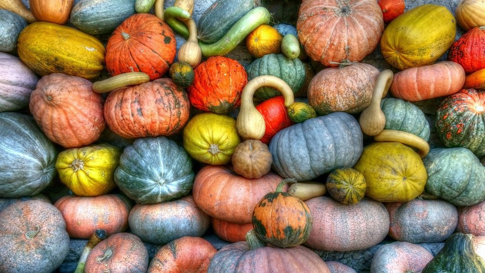 fall pumpkins and squash.jpg