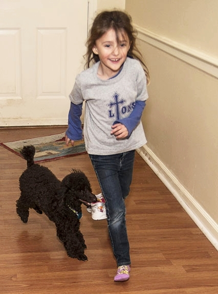 lexington in-home dog training behaviorist