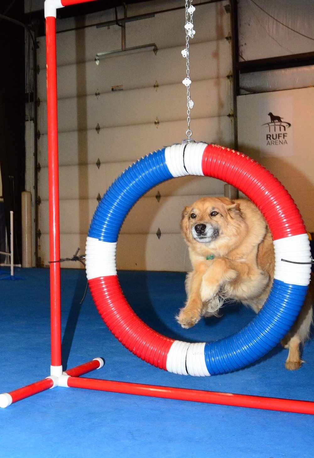 lexington dog agility classes