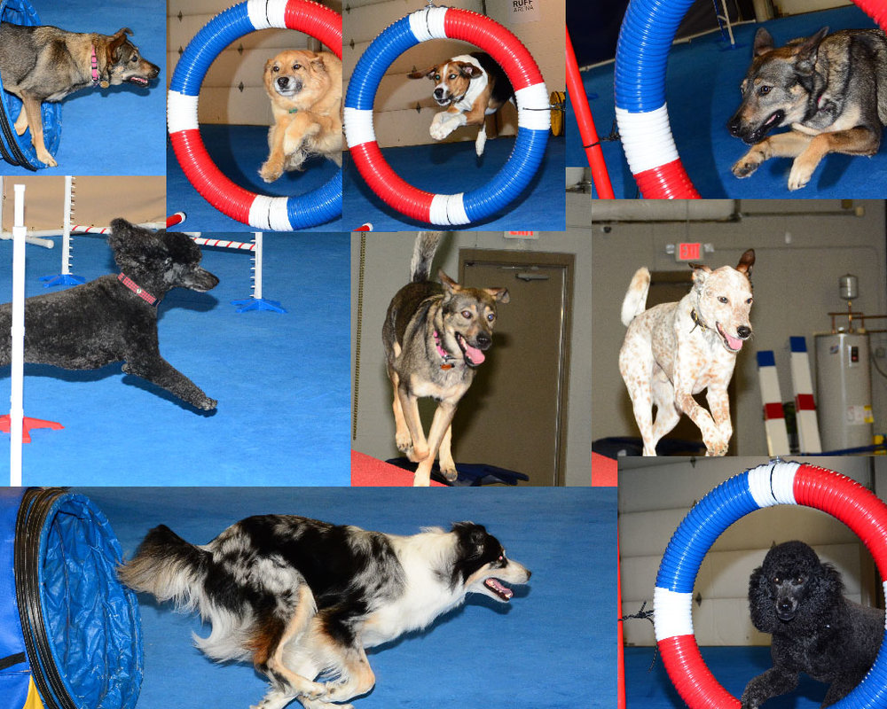 lexington best dog agility classes in kentucky