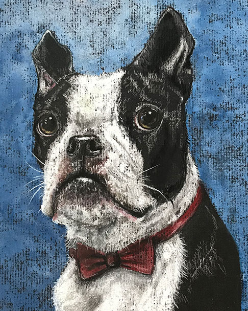 Mr. Handsome, Boston Terrier, 2018
