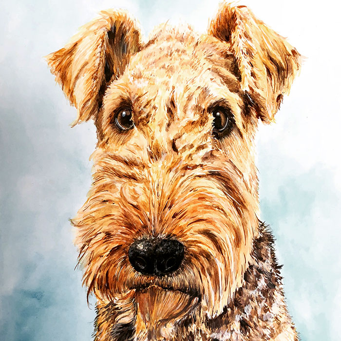 Airedale I, 2018