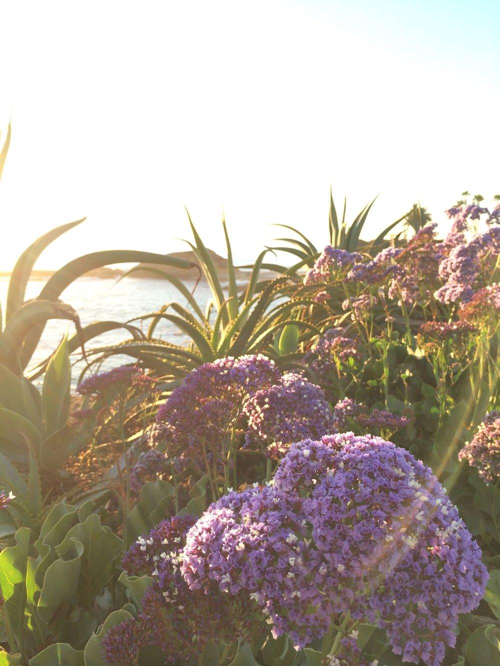 montage-flowers.jpg