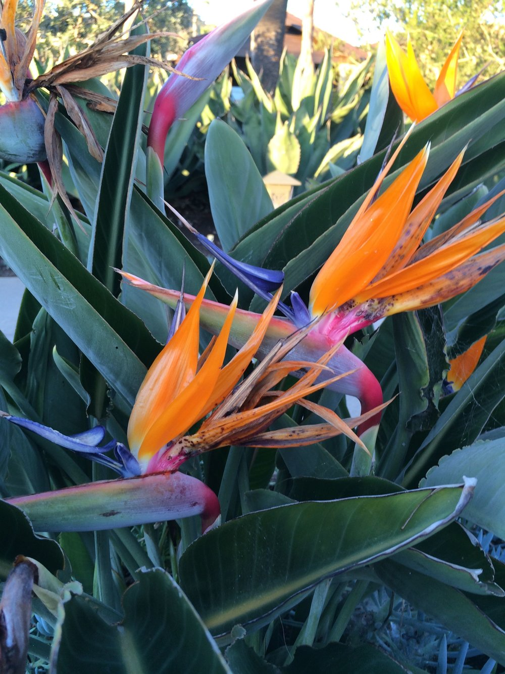 montage-bird-flowers.jpg