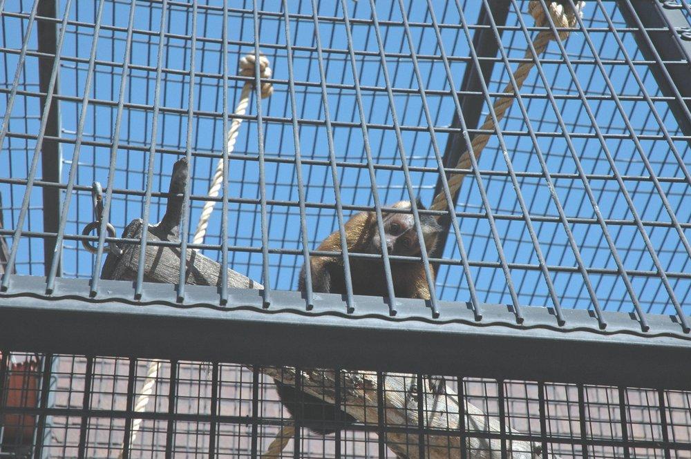 zoo-monkey.jpg