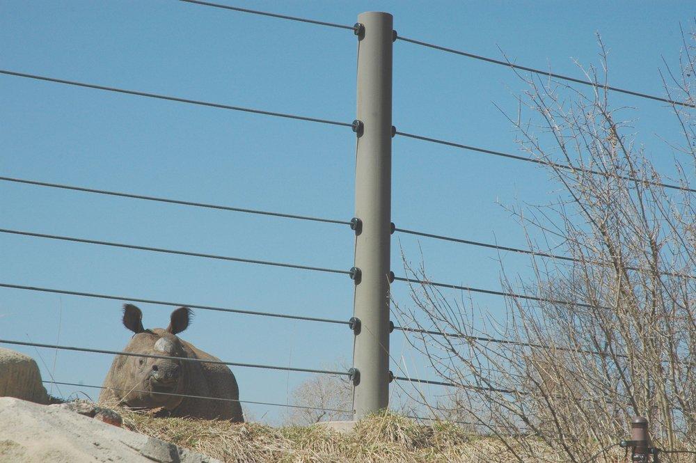 zoo-rhino.jpg