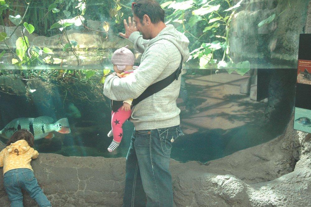 zoo-fish.jpg