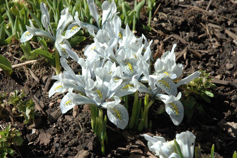 garden-flowers-white.jpg