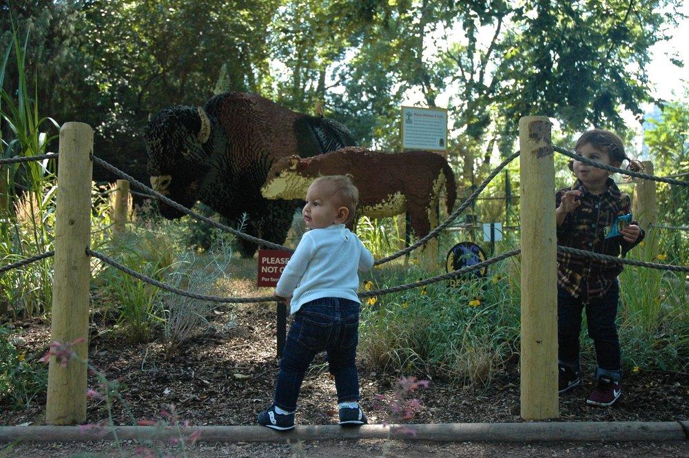 z-cows.jpg