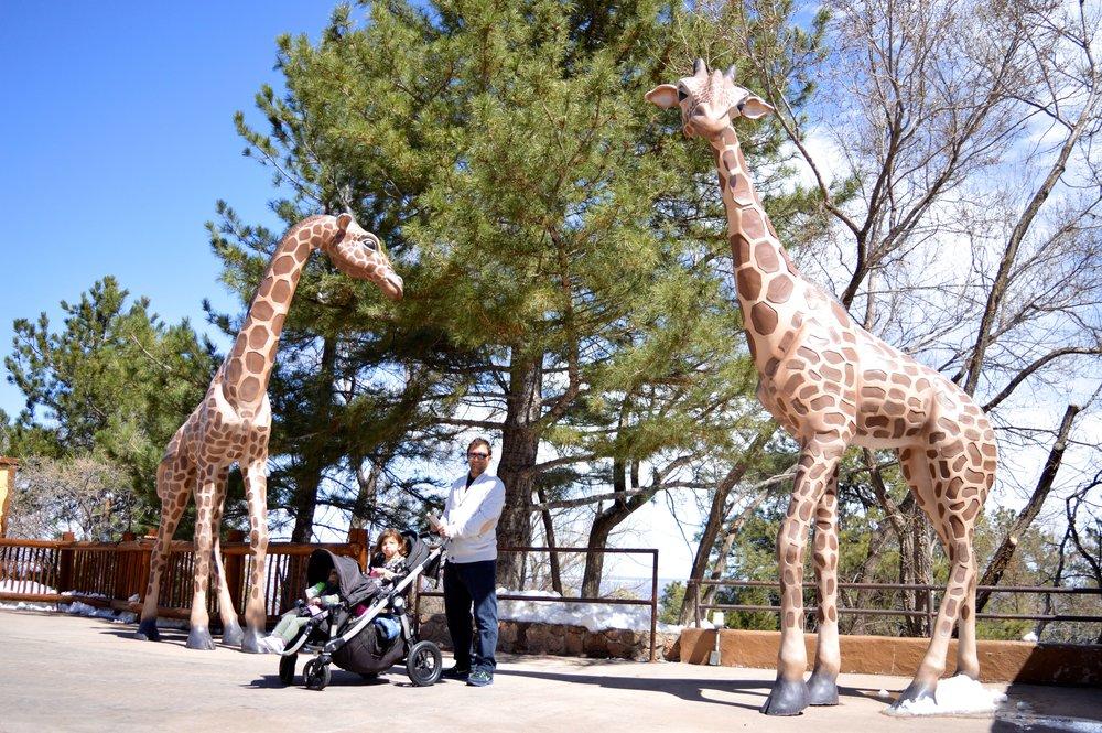 cheyenne-mountain-zoo-giraffe-1.jpg