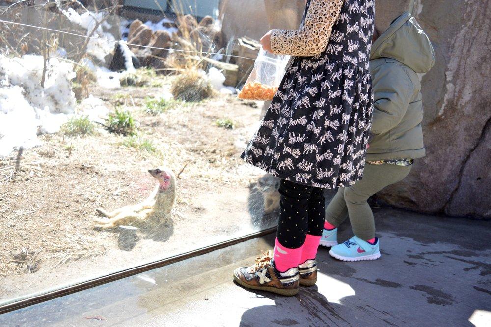 cheyenne-mountain-zoo-makeet.jpg
