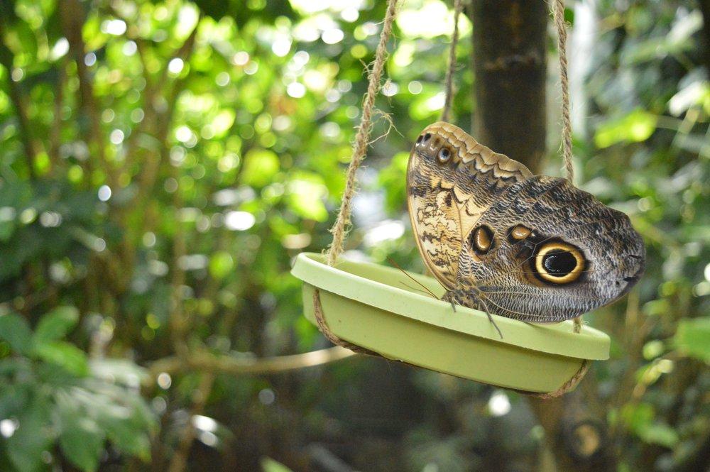 butterfly-pavilion-18-1.jpg