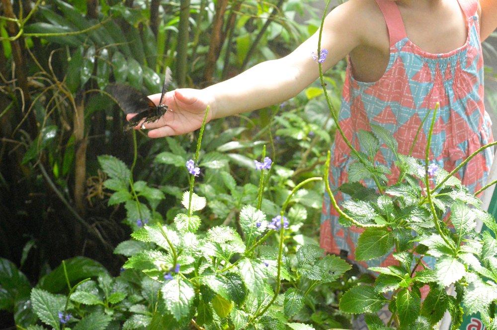 butterfly-pavilion-22.jpg
