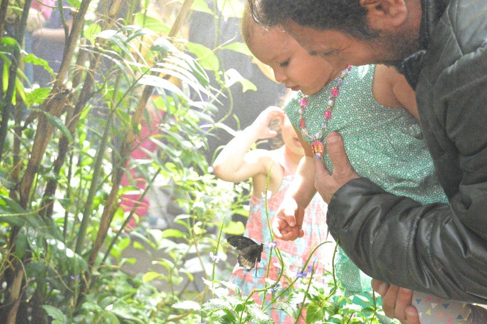 butterfly-pavilion-23.jpg