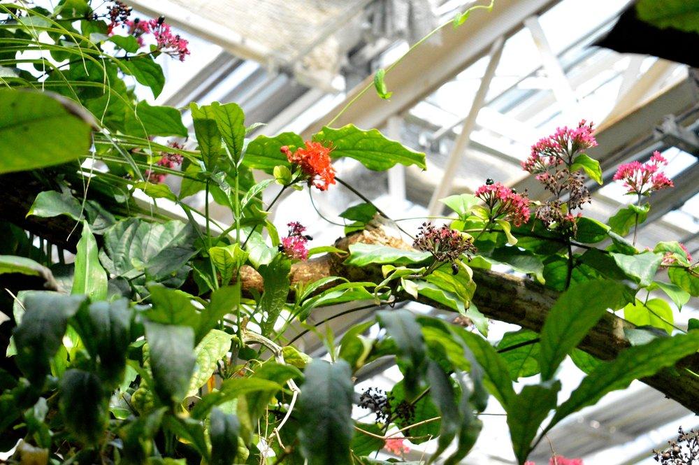 butterfly-pavilion-25.jpg