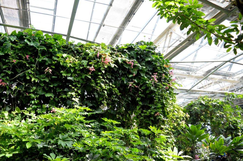 butterfly-pavilion-39.jpg