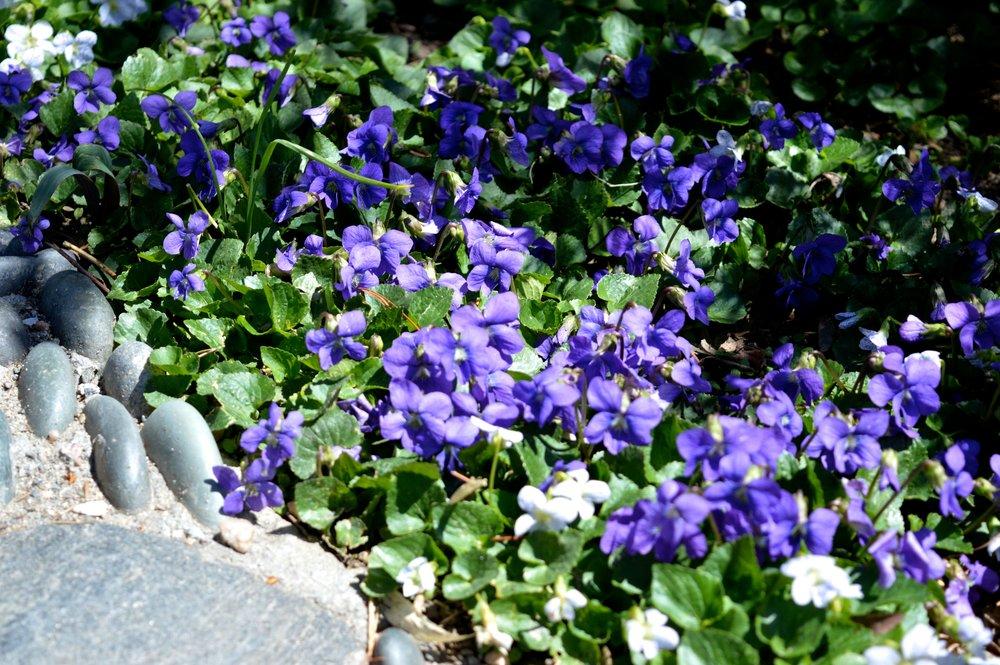 denver-botanic-gardens-April-13-14.jpg