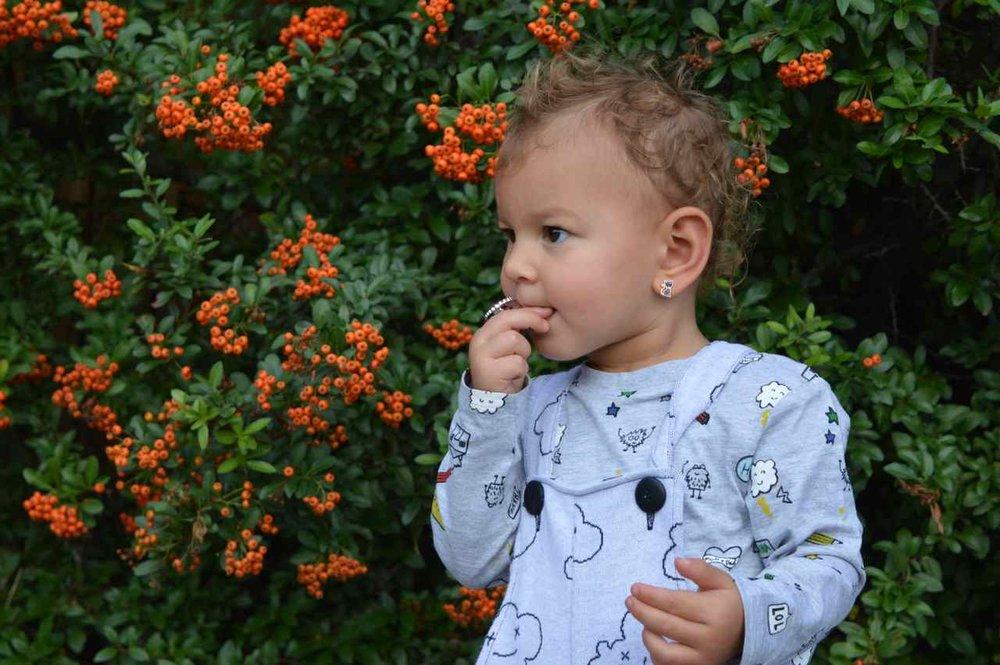 orange-berry-bush-1.jpg