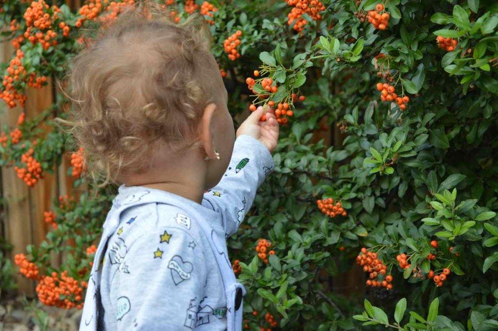 orange-berry-bush-11.jpg