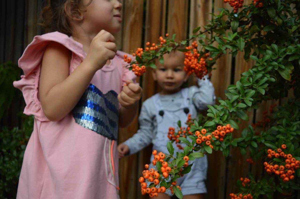 orange-berry-bush-15.jpg
