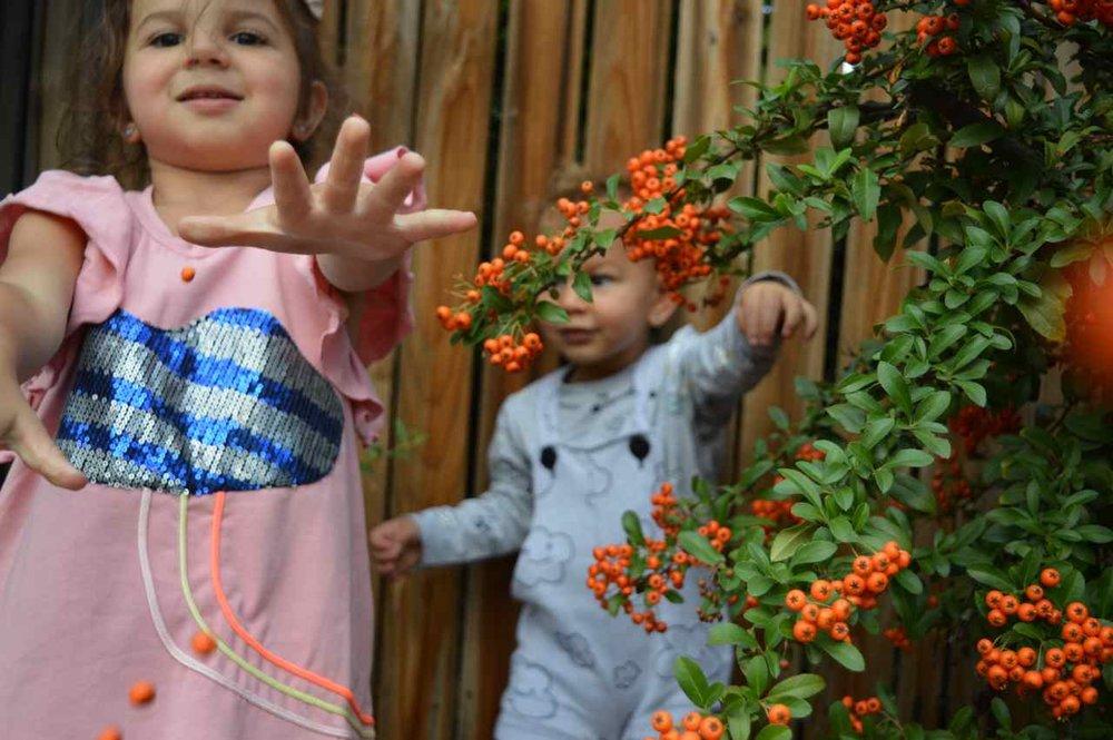 orange-berry-bush-16.jpg