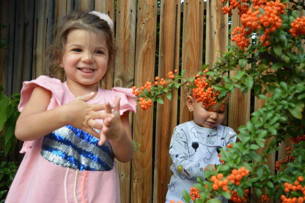 orange-berry-bush-17.jpg