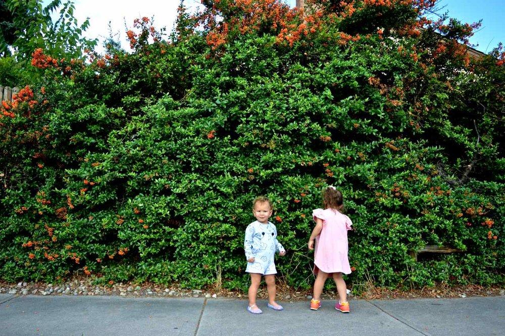 orange-berry-bush-18.jpg