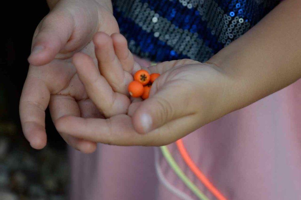 orange-berry-bush-20.jpg