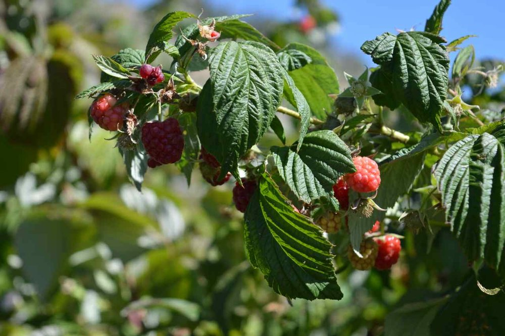 delicious-orchards-apple-picking-paonia-colorado-9.jpg