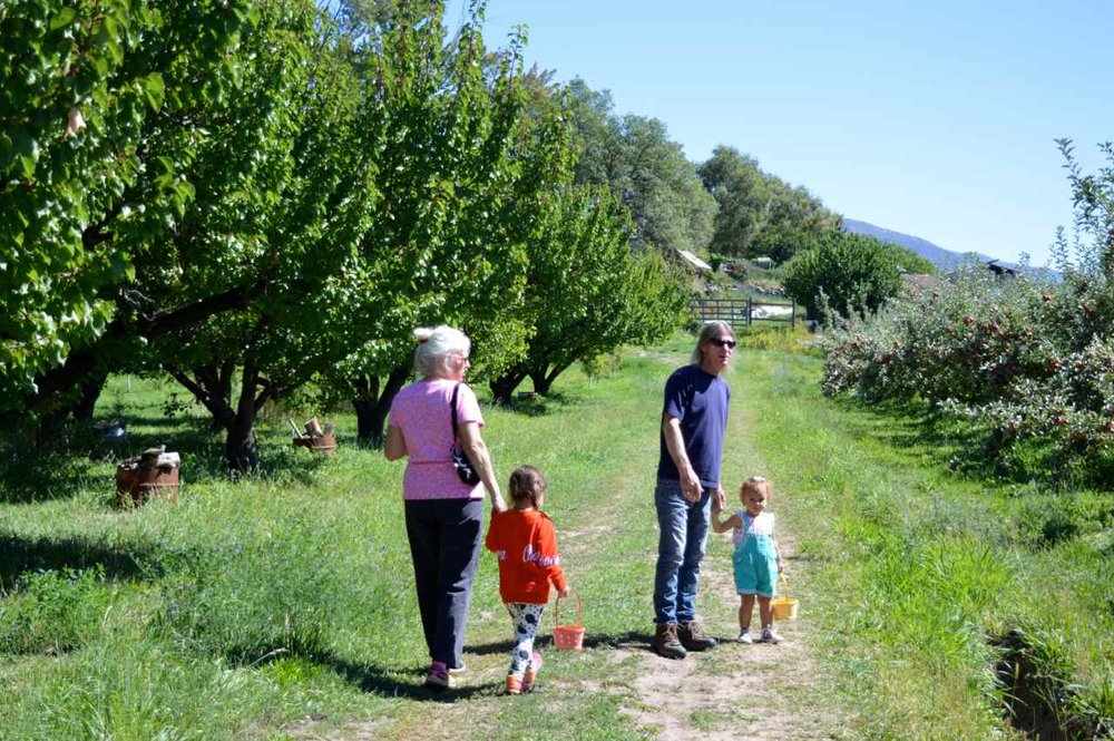 delicious-orchards-apple-picking-paonia-colorado-15.jpg