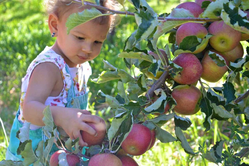 delicious-orchards-apple-picking-paonia-colorado-16.jpg