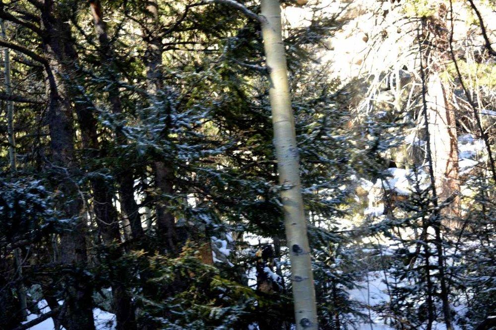 Pikes-Peak-Cog-Railway-Colorado-Springs-13.jpg