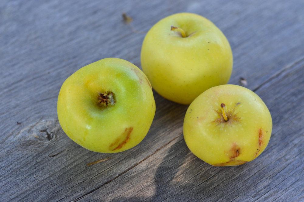 Apple-Picking-in-Colorado-11.jpg