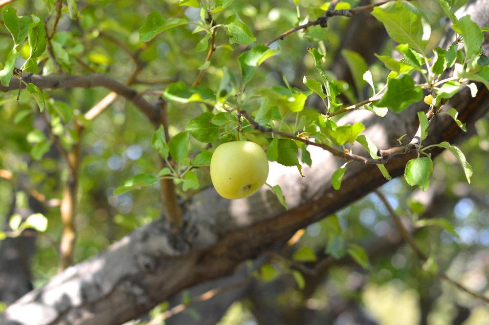 Apple-Picking-in-Colorado-13.jpg