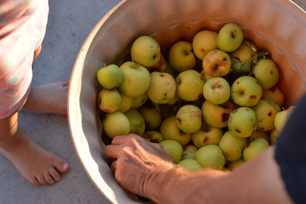 Apple-Picking-in-Colorado-16.jpg