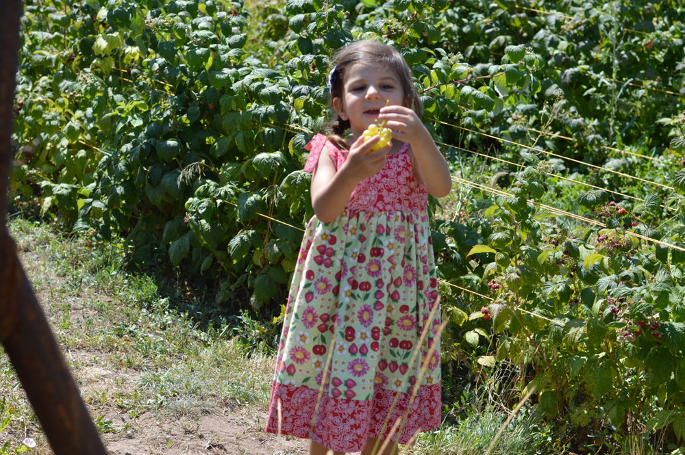 Fruit-Picking-at-Delicious-Orchards-32.jpg
