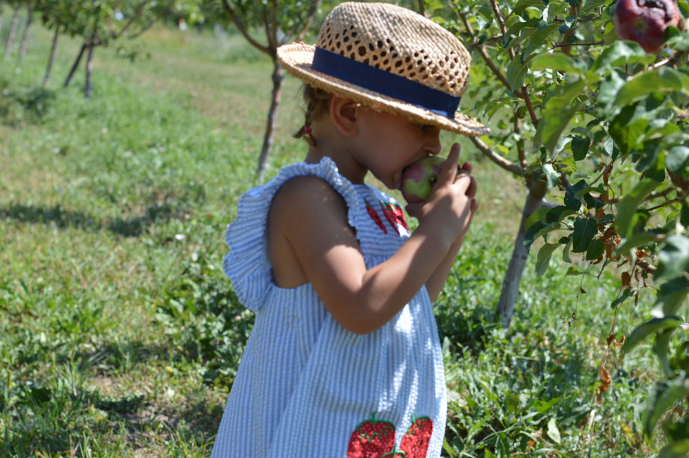 Fruit-Picking-at-Delicious-Orchards-40.jpg