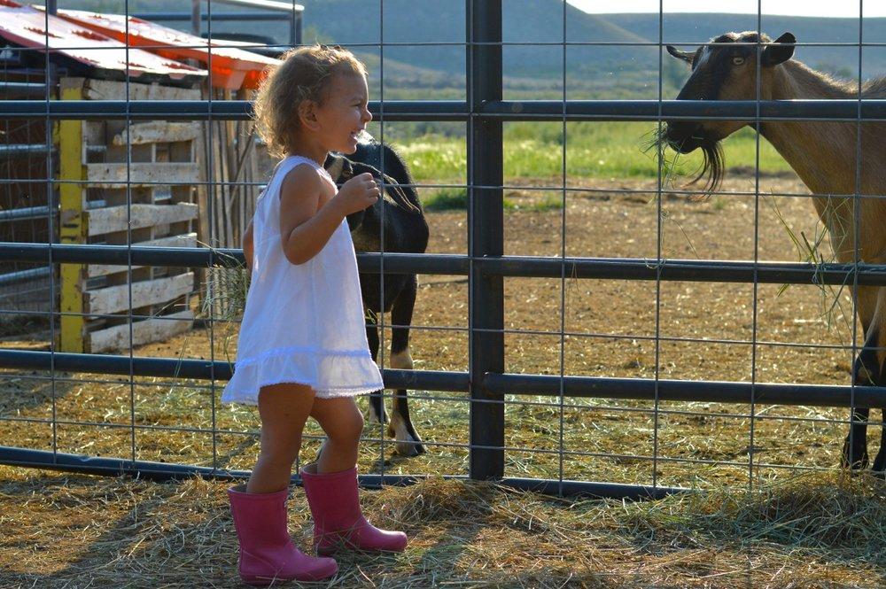 Olathe-Colorado-Hay-Farm-2.jpg