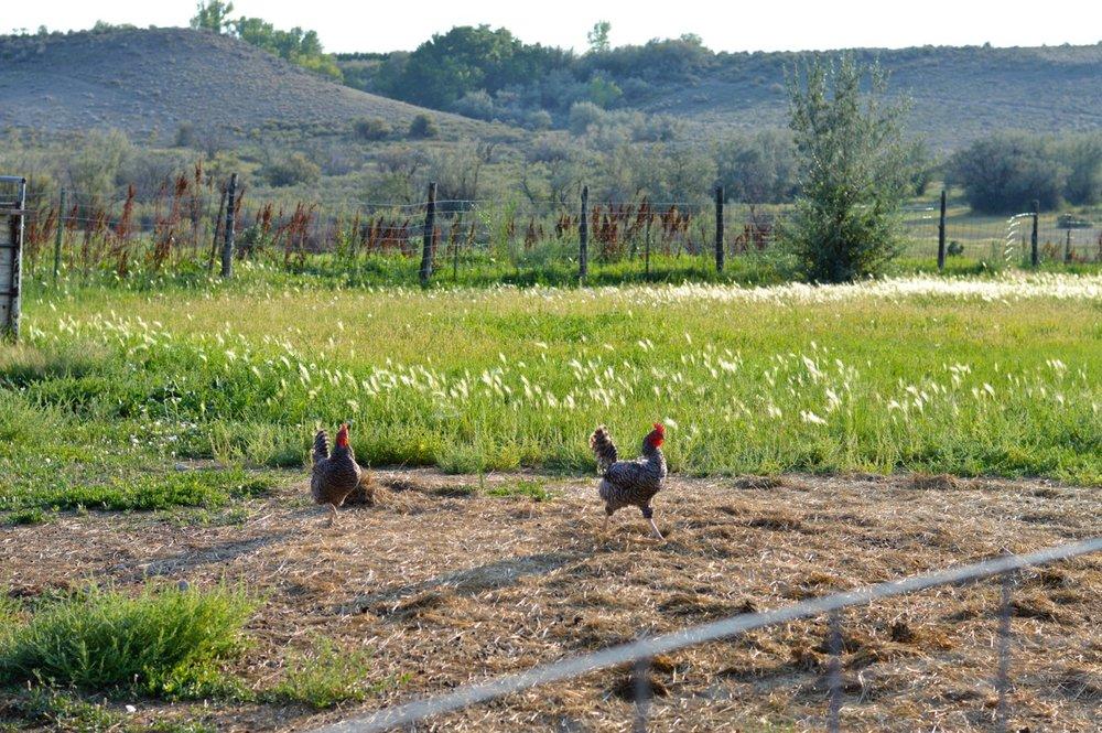 Olathe-Colorado-Hay-Farm-3.jpg
