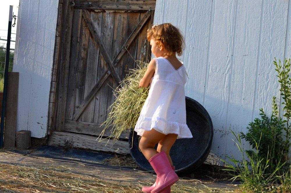 Olathe-Colorado-Hay-Farm-7.jpg