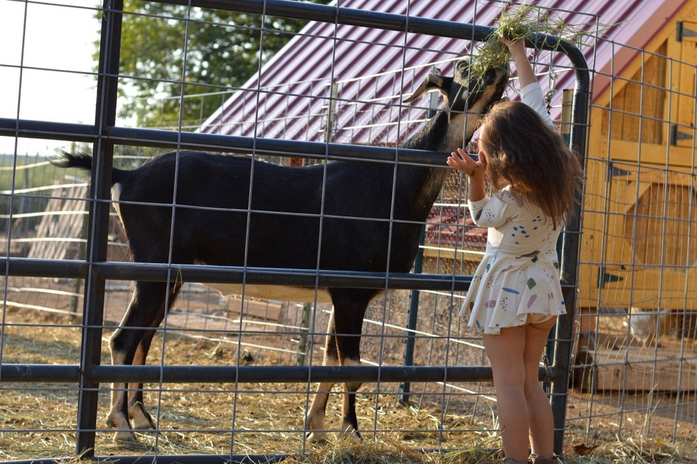 Olathe-Colorado-Hay-Farm-8.jpg