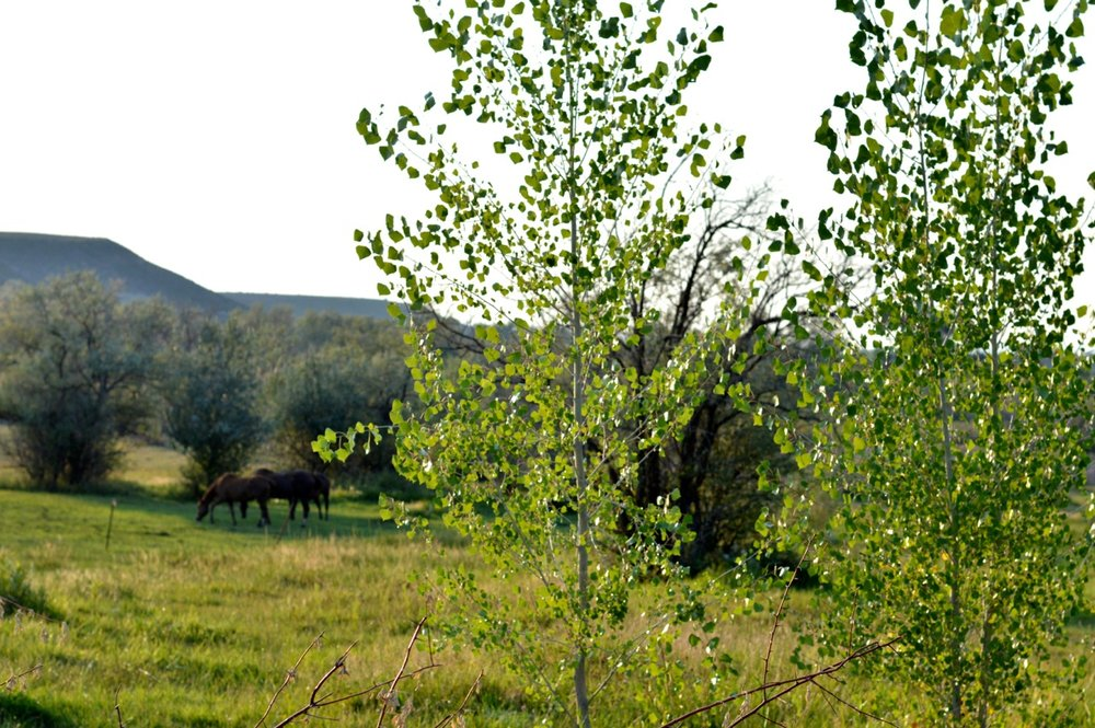 Olathe-Colorado-Hay-Farm-25.jpg