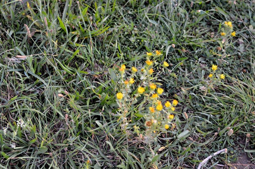 Olathe-Colorado-Hay-Farm-26.jpg