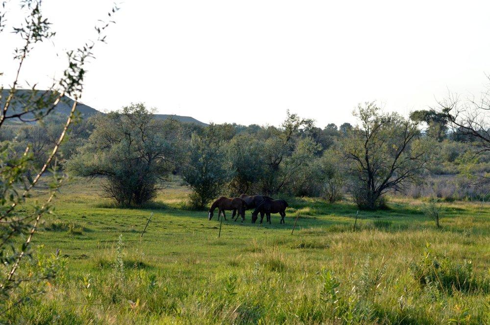 Olathe-Colorado-Hay-Farm-27.jpg